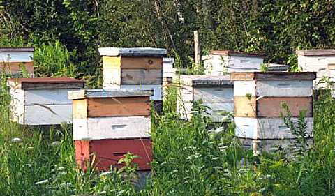 Back to Basics- Backyard Beekeeping