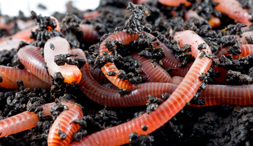 Composting and wormfarming 01
