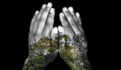 hands and trees