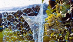 netting grapes